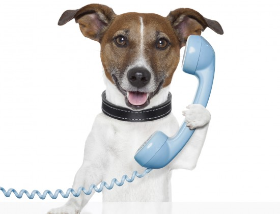 dog on the phone talking and calling