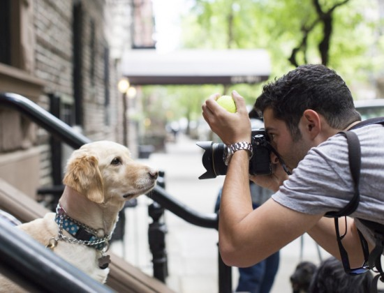 "This undated photo provided by Artisan Books shows Elias Weiss Friedman photographing a dog in New York. Photos taken for his blog, ""The Dogist,"" have been collected in Friedman's new book of the same name. (Jeff Hodson/Artisan Books via AP)   Excerpted from The Dogist by Elias Weiss Friedman (Artisan Books). Copyright © 2015. Photographs by The Dogist, LLC."