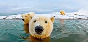 polar-bear-2