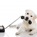 dog-on-phone
