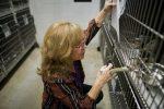 life_pets-shelter-manage_2_sa__9572297_ver1-0_640_480