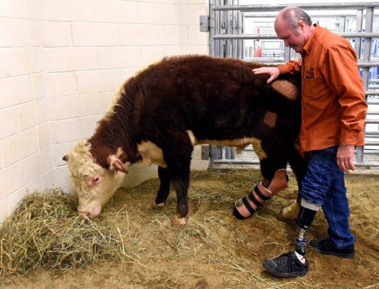 steer-prosthetic-leg-feb-27-2015